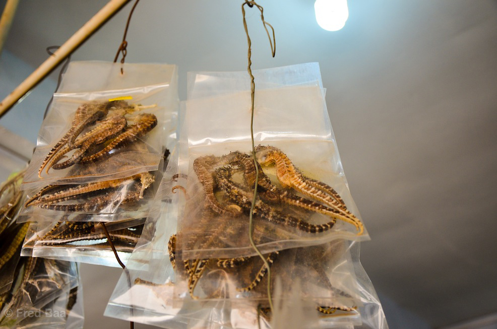 Dried seahorses. Yes.
